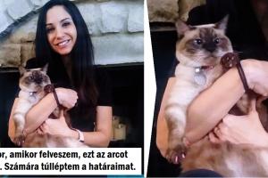 20+ cica, akinek fogalma sincs róla, hogyan kellene viselkednie a szerető gazdájával