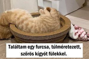 15 kép, amely megmutatja, hogy a cicák folyékony halmazállapotúak