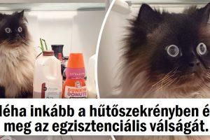 20 állat, akiknek használati utasításra van szükségük, hogy megértsék őket