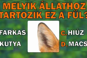 Teszt: Derítsd ki, hogy meg tudod-e találni az összes állatot, ami ezeken a képeken van elrejtve.